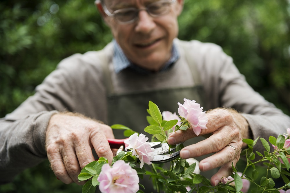 Senhor cortando flor