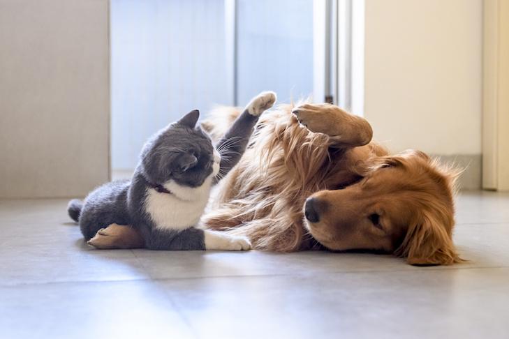 Os melhores produtos para Pet: opções para cachorros e gatos